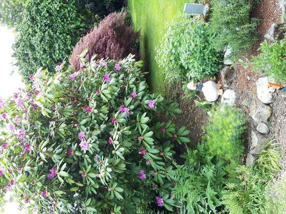 Linse Garten 1