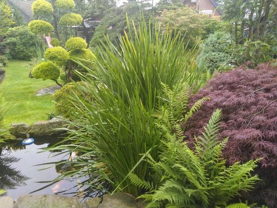Der Regengesättigte Garten
